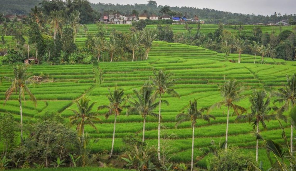 Travelling to Bali: Our tips for travelling to Bali